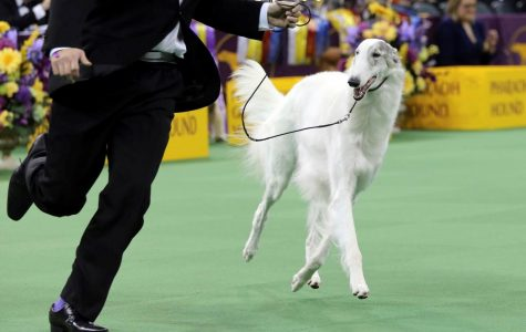 The 142nd Westminster Dog Show