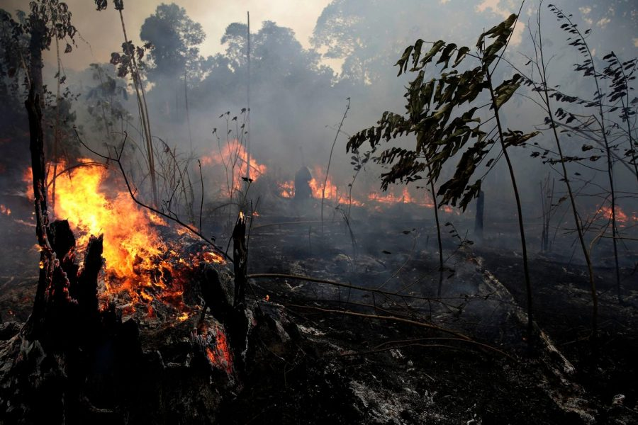 Fires+in+the+Amazon+Rainforest
