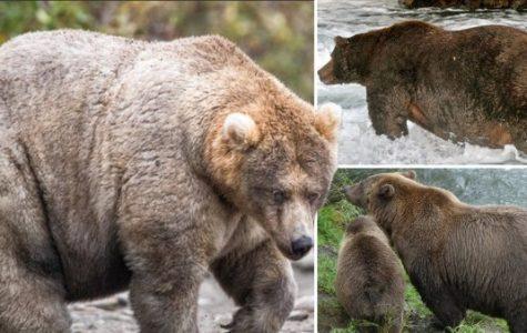 A Bear-y Fun Competition